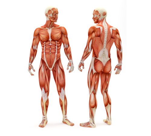 VTCT Level 3 Award in Anatomical and Physiological Knowledge of Body Systems